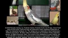 Beta de papagaios papagaio de tela de inicialização para GTA San Andreas