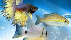 Peixe novo (oceano)