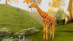 Giraffe (Mammal)