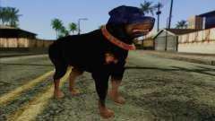 Rottweiler from GTA 5 Skin 3