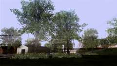 A textura das árvores do BISPO